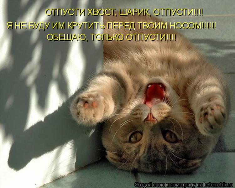 Котоматрица: ОТПУСТИ ХВОСТ, ШАРИК, ОТПУСТИ!!!! Я НЕ БУДУ ИМ КРУТИТЬ ПЕРЕД ТВОИМ НОСОМ!!!!!! ОБЕЩАЮ, ТОЛЬКО ОТПУСТИ!!!!