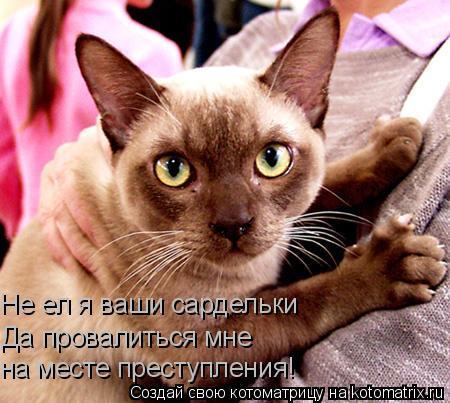 Котоматрица: Не ел я ваши сардельки Да провалиться мне  на месте преступления!