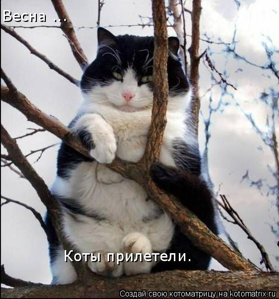 http://kotomatrix.ru/images/lolz/2008/10/15/m5.jpg