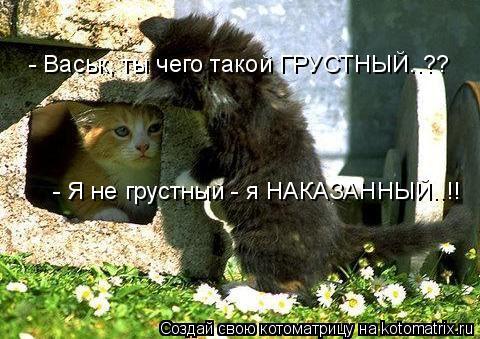 Котоматрица: - Я не грустный - я НАКАЗАННЫЙ..!! - Васьк, ты чего такой ГРУСТНЫЙ..??