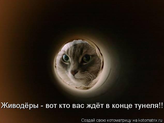 Котоматрица: Живодёры - вот кто вас ждёт в конце тунеля!!