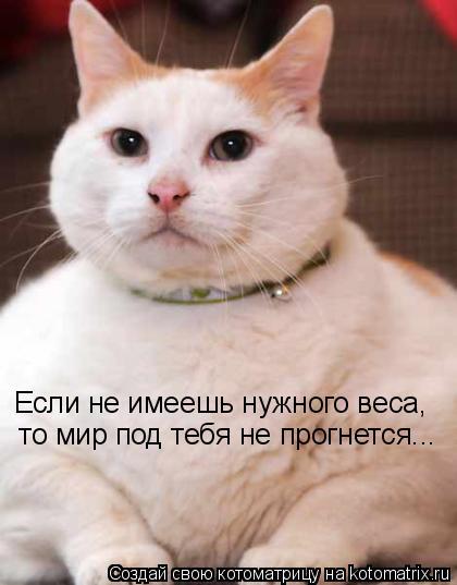 Котоматрица: Если не имеешь нужного веса,   то мир под тебя не прогнется...