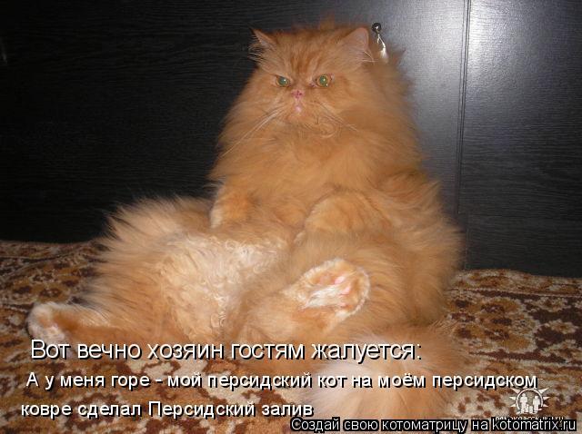 Котоматрица: Вот вечно хозяин гостям жалуется: А у меня горе - мой персидский кот на моём персидском  ковре сделал Персидский залив