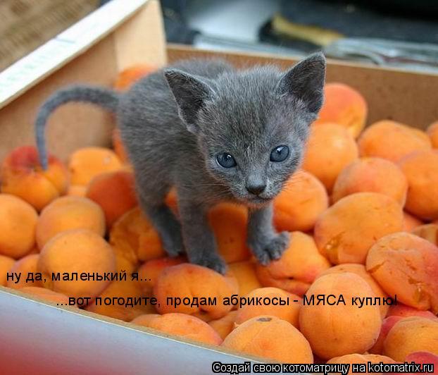 Котоматрица: ну да, маленький я... ...вот погодите, продам абрикосы - МЯСА куплю!