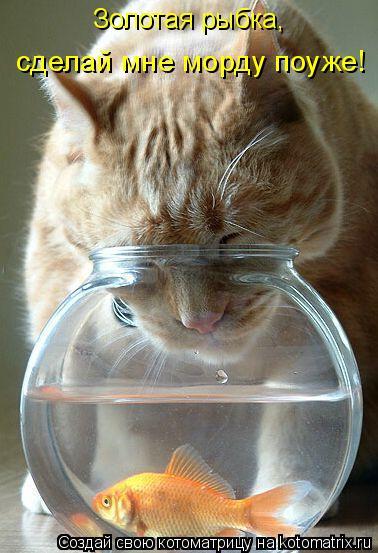 Котоматрица: Золотая рыбка, сделай мне морду поуже!