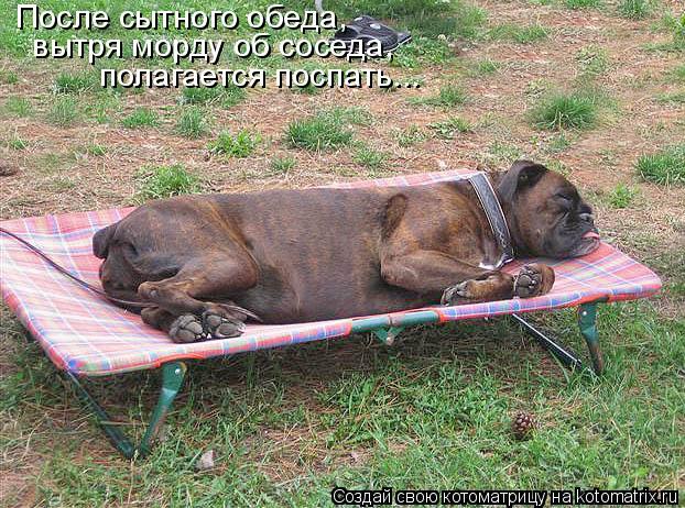 Котоматрица: После сытного обеда,  вытря морду об соседа,  полагается поспать...
