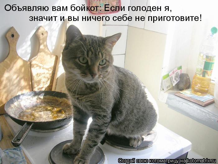 Котоматрица: Объявляю вам бойкот: Если голоден я,  значит и вы ничего себе не приготовите!