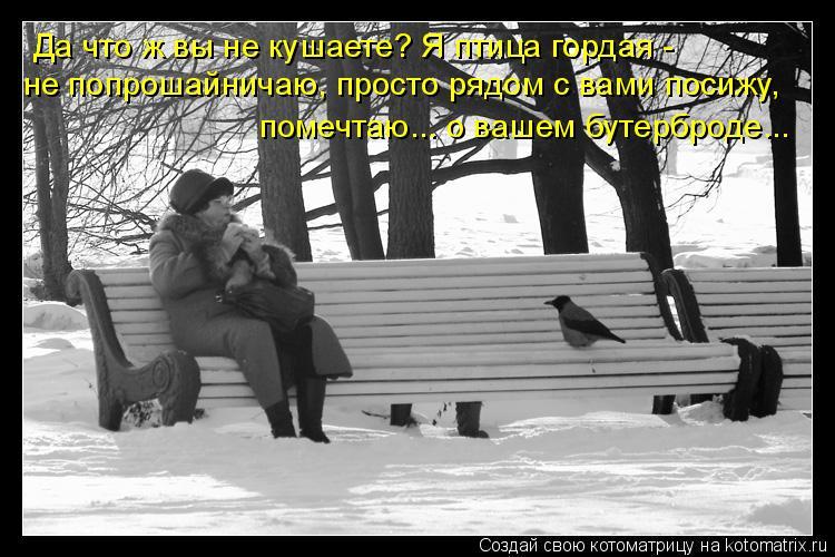 Котоматрица: Да что ж вы не кушаете? Я птица гордая -  не попрошайничаю, просто рядом с вами посижу,  помечтаю... о вашем бутерброде...