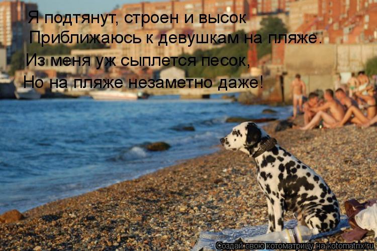 Котоматрица: Я подтянут, строен и высок Приближаюсь к девушкам на пляже. Из меня уж сыплется песок, Но на пляже незаметно даже!