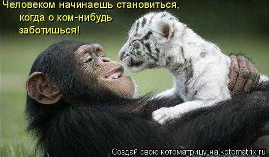 Котоматрица: Человеком начинаешь становиться,  когда о ком-нибудь заботишься!
