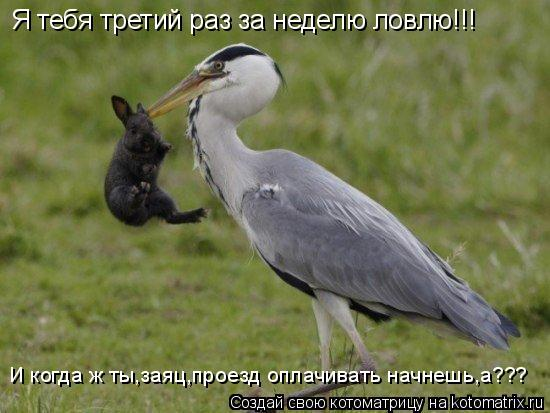 Котоматрица: Я тебя третий раз за неделю ловлю!!! И когда ж ты,заяц,проезд оплачивать начнешь,а???