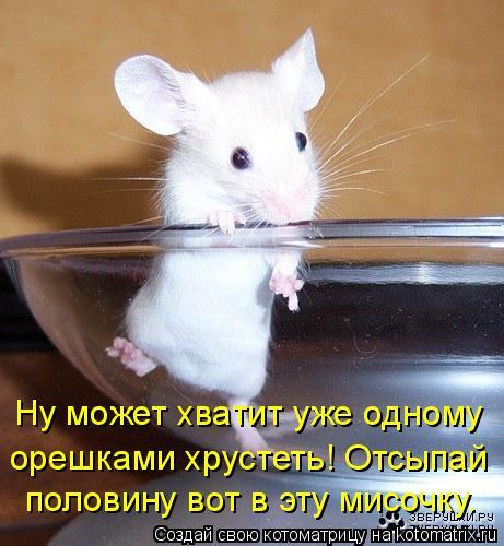 Котоматрица: Ну может хватит уже одному  орешками хрустеть! Отсыпай  половину вот в эту мисочку.