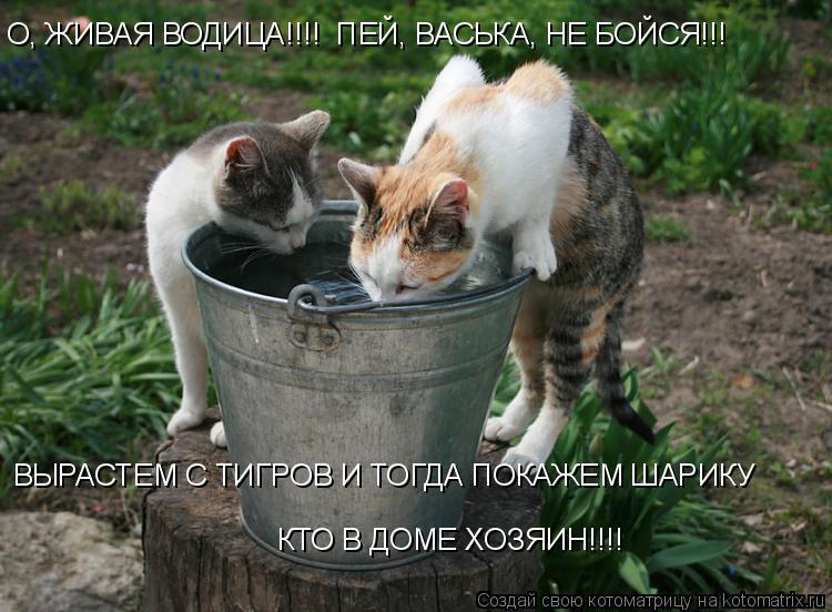 Котоматрица: О, ЖИВАЯ ВОДИЦА!!!!  ПЕЙ, ВАСЬКА, НЕ БОЙСЯ!!! ВЫРАСТЕМ С ТИГРОВ И ТОГДА ПОКАЖЕМ ШАРИКУ КТО В ДОМЕ ХОЗЯИН!!!!
