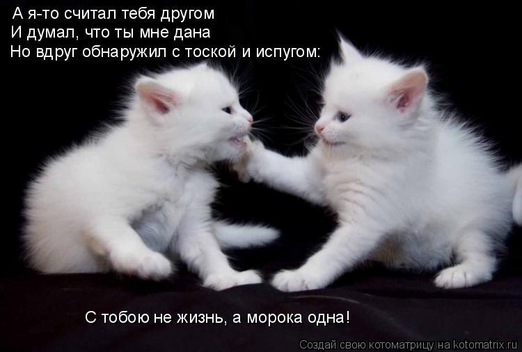 Котоматрица: А я-то считал тебя другом И думал, что ты мне дана Но вдруг обнаружил с тоской и испугом: С тобою не жизнь, а морока одна!