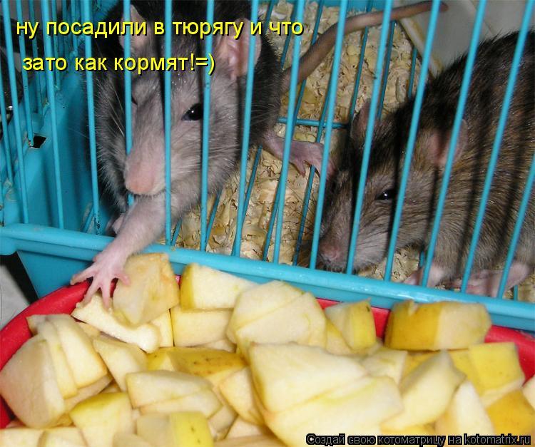 Котоматрица: ну посадили в тюрягу и что зато как кормят!=)