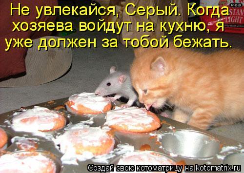 Котоматрица: Не увлекайся, Серый. Когда  хозяева войдут на кухню, я  уже должен за тобой бежать.