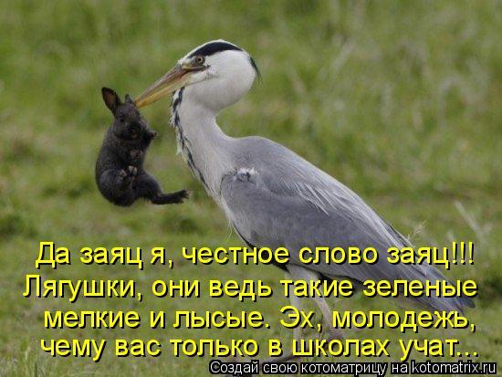Котоматрица: Да заяц я, честное слово заяц!!! Лягушки, они ведь такие зеленые мелкие и лысые. Эх, молодежь,  чему вас только в школах учат...