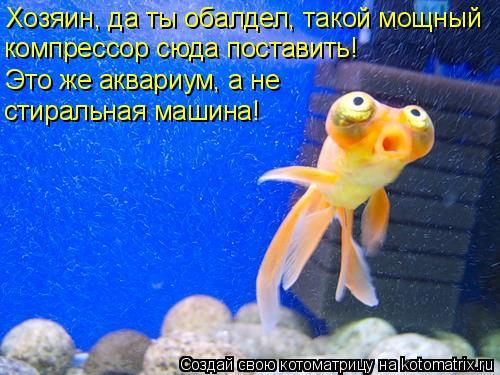 Котоматрица: Хозяин, да ты обалдел, такой мощный  компрессор сюда поставить!  Это же аквариум, а не  стиральная машина!