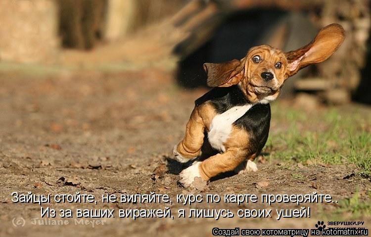 Котоматрица: Зайцы стойте, не виляйте, курс по карте проверяйте.. Из за ваших виражей, я лишусь своих ушей!