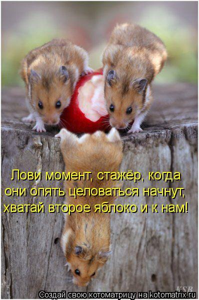 Котоматрица: Лови момент, стажёр, когда  они опять целоваться начнут,  хватай второе яблоко и к нам!