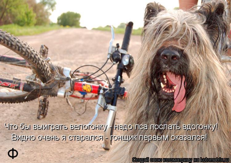 Котоматрица: Что бы выиграть велогонку - надо пса послать вдогонку! Видно очень я старался - гонщик первым оказался!