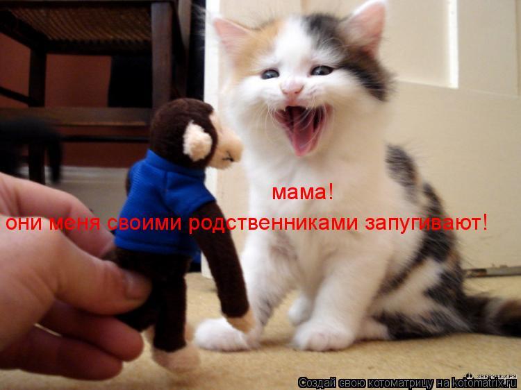 Котоматрица: они меня своими родственниками запугивают! мама!