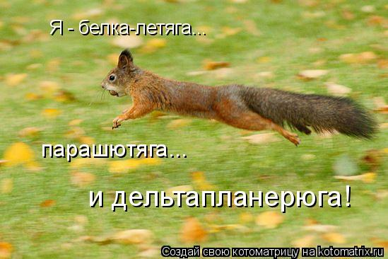 Котоматрица: Я - белка-летяга... парашютяга... и дельтапланерюга!