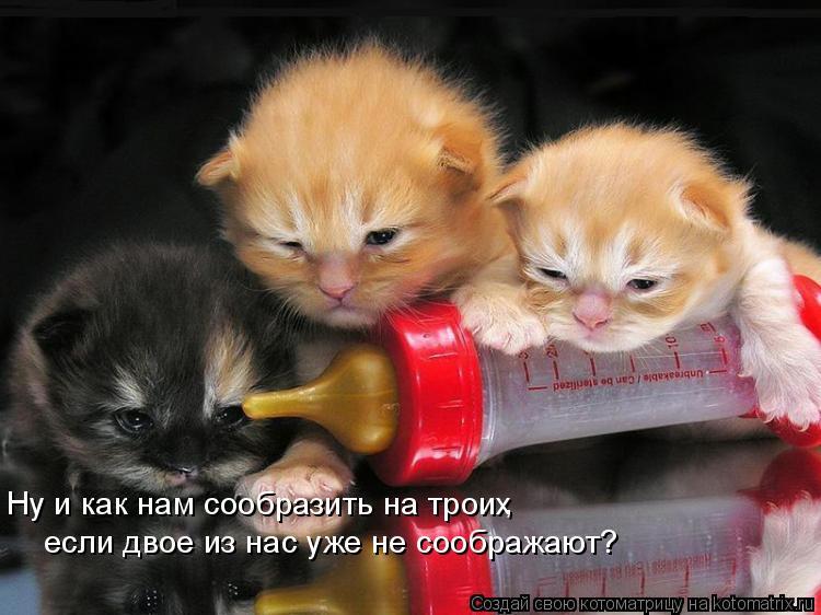 Котоматрица: Ну и как нам сообразить на троих , если двое из нас уже не соображают?