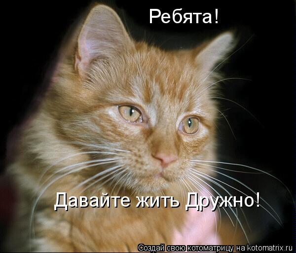 Рыжий кот: предпросмотр.