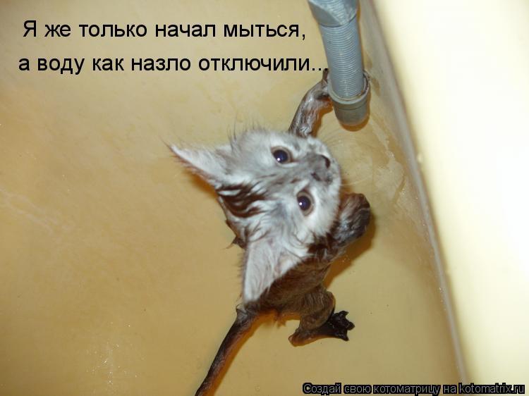 Котоматрица: Я же только начал мыться, а воду как назло отключили...