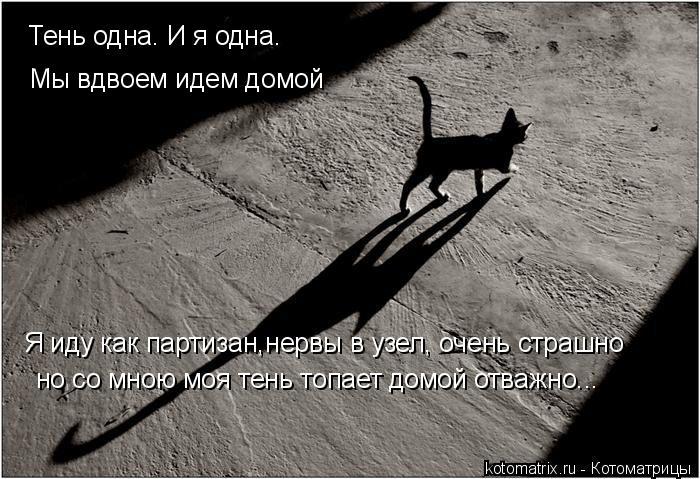 Котоматрица: Тень одна. И я одна. Мы вдвоем идем домой Я иду как партизан,нервы в узел, очень страшно но со мною моя тень топает домой отважно...