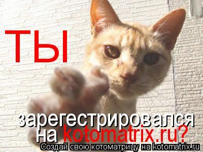 Котоматрица: ТЫ зарегестрировался на kotomatrix.ru?