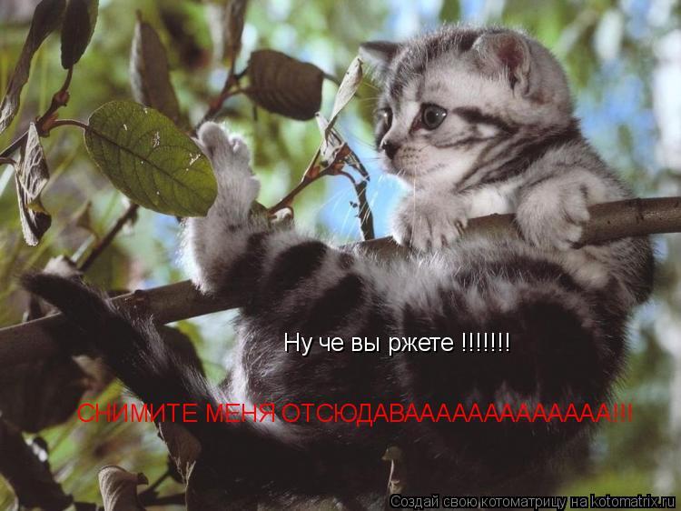 Котоматрица: Ну че вы ржете !!!!!!! СНИМИТЕ МЕНЯ ОТСЮДАВААААААААААААА!!!