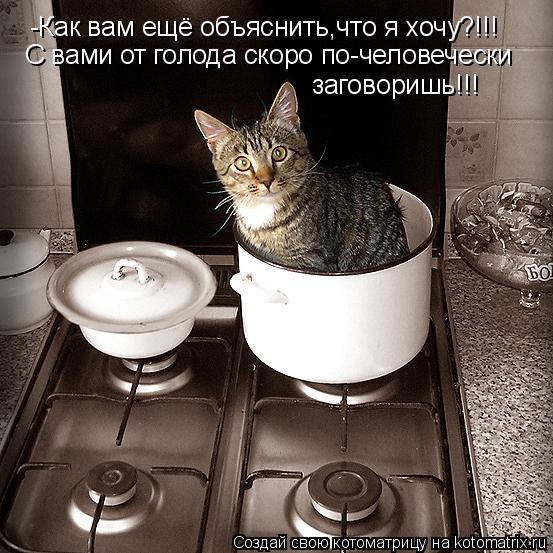 Котоматрица: -Как вам ещё объяснить,что я хочу?!!! С вами от голода скоро по-человечески заговоришь!!!