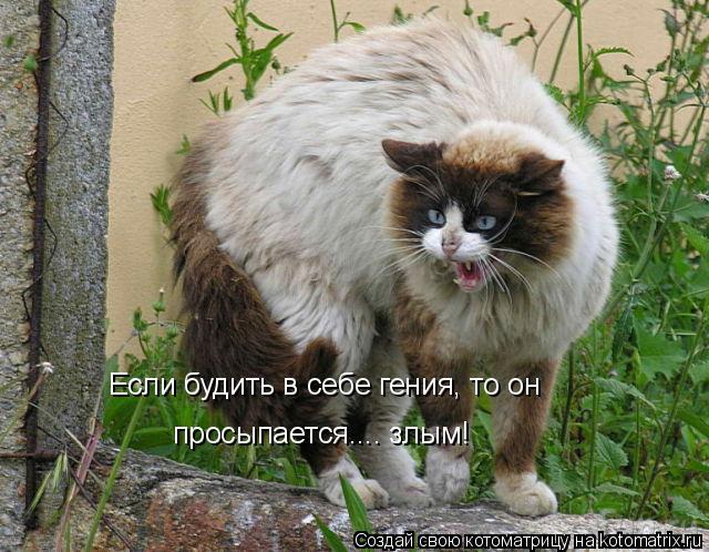 Котоматрица: Если будить в себе гения, то он просыпается.... злым!