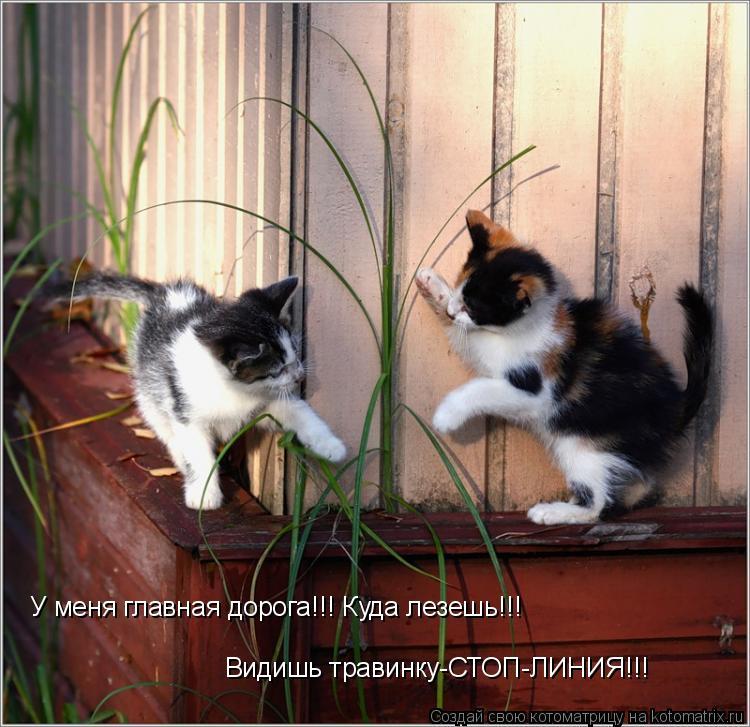 Котоматрица: Видишь травинку-СТОП-ЛИНИЯ!!! У меня главная дорога!!! Куда лезешь!!!