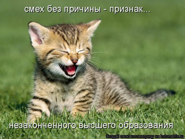 Котоматрица: смех без причины - признак... незаконченного высшего образования