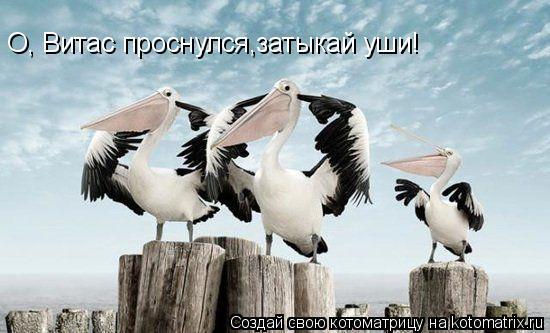 Котоматрица: О, Витас проснулся,затыкай уши!