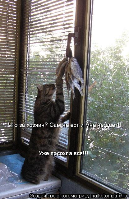 Котоматрица: Что за хозяин? Сам не ест и мне не дает!!! Уже посохла вся!!!