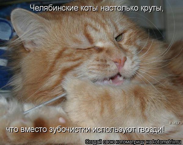 Котоматрица: Челябинские коты настолько круты, что вместо зубочистки используют гвозди!