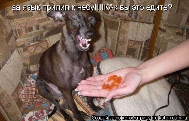 Котоматрица: аа язык прилип к небу!!!!КАк вы это едите?