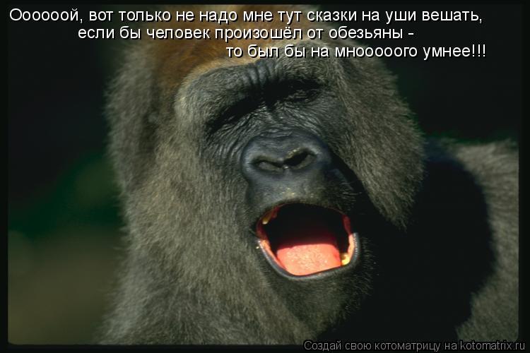 Котоматрица: Оооооой, вот только не надо мне тут сказки на уши вешать, если бы человек произошёл от обезьяны -  то был бы на мнооооого умнее!!!