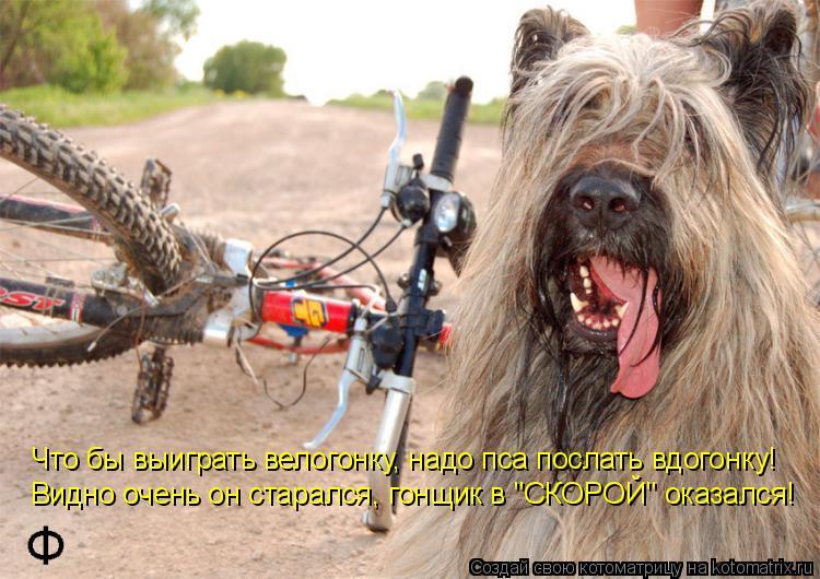 """Котоматрица: Что бы выиграть велогонку, надо пса послать вдогонку! Видно очень он старался, гонщик в """"СКОРОЙ"""" оказался!"""