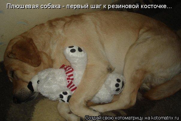 Котоматрица: Плюшевая собака - первый шаг к резиновой косточке...