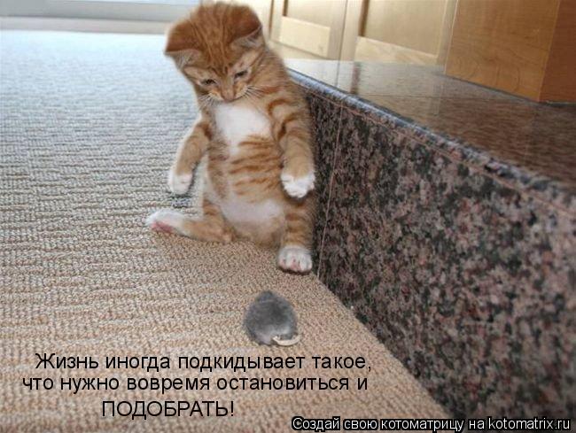 Котоматрица: Жизнь иногда подкидывает такое,  что нужно вовремя остановиться и  ПОДОБРАТЬ!