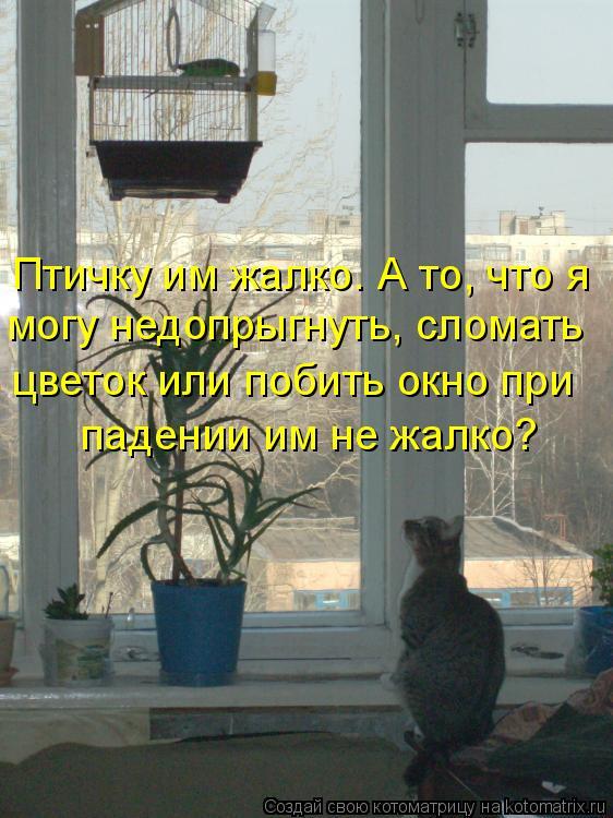 Котоматрица: Птичку им жалко. А то, что я  могу недопрыгнуть, сломать  цветок или побить окно при  падении им не жалко?