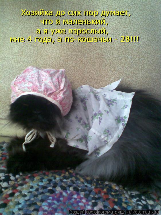 Котоматрица: Хозяйка до сих пор думает, что я маленький, а я уже взрослый, мне 4 года, а по-кошачьи - 28!!!