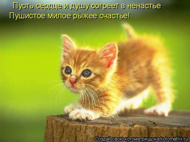 Котоматрица: Пусть сердце и душу согреет в ненастье Пушистое милое рыжее счастье!