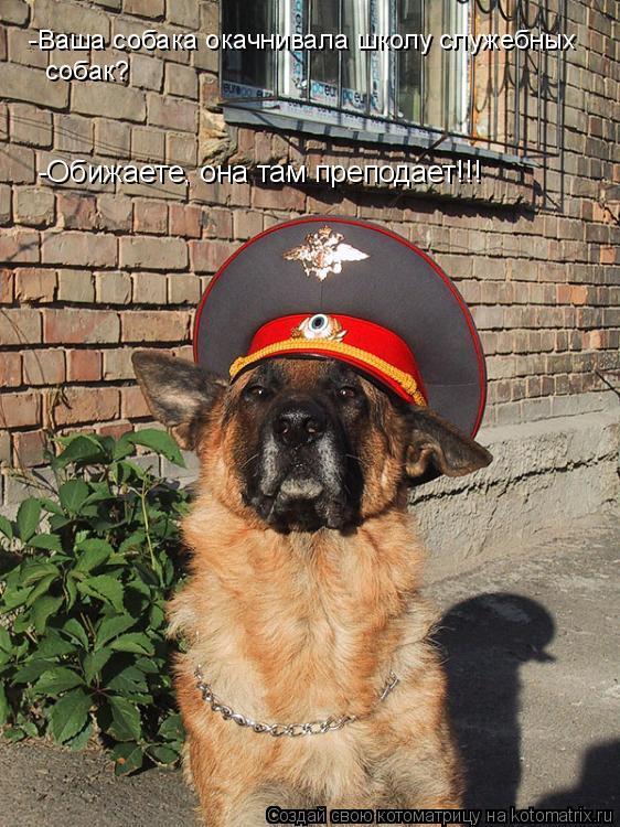 Котоматрица: -Ваша собака окачнивала школу служебных собак? -Обижаете, она там преподает!!!