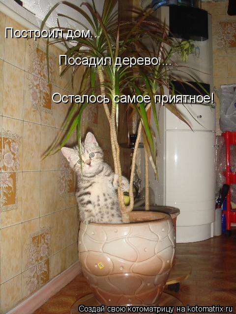 Котоматрица: Построил дом... Посадил дерево.... Осталось самое приятное!
